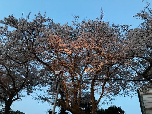 お花見 - 15.jpg