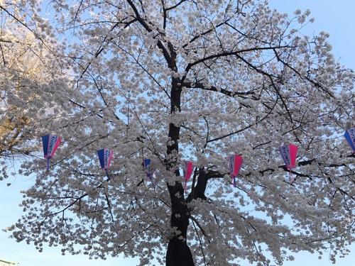 ぽちのアキバ漂流2日目-2009.jpg